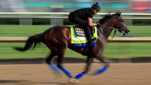 Game Winner trains on the track during morning workouts in preparation for the 145th running of the Kentucky Derby at Churchill Downs on May 2, 2019 in Louisville, Kentucky.
